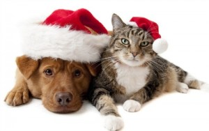 pet-valu-giveaway-holiday-dog-cat