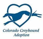 Colorado-Greyhound-Adpotion