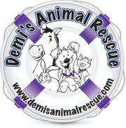 Demis-animal-rescue-2