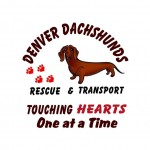 Denver-Dachshund-Rescue