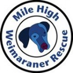 Mile-High-Weimaraner-Rescue-MHWR